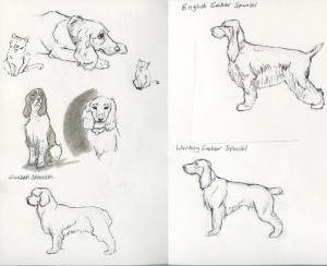 Dog Sketches 2